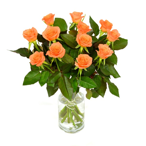 Sainsbury's Sweet Roses Bouquet (Colour may vary)   Sainsbury's on taylor flowers, reed flowers, tesco flowers, sharp flowers, amazon flowers, clarke flowers, ikea flowers, monsoon flowers,