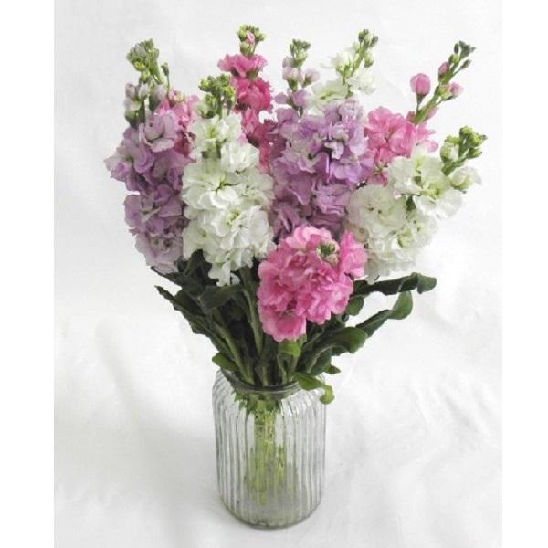 Sainsbury's Simply Stocks Bouquet   Sainsbury's on taylor flowers, reed flowers, tesco flowers, sharp flowers, amazon flowers, clarke flowers, ikea flowers, monsoon flowers,