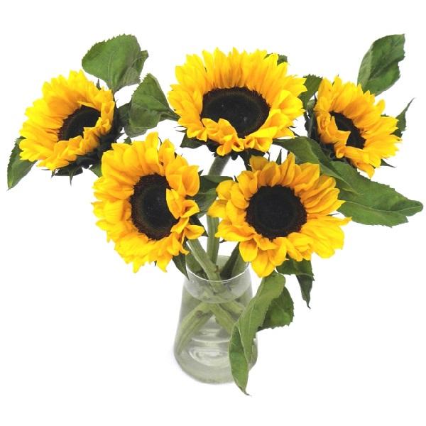 Sainsbury's Simply Sunflowers Bouquet   Sainsbury's on taylor flowers, reed flowers, tesco flowers, sharp flowers, amazon flowers, clarke flowers, ikea flowers, monsoon flowers,